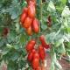 بذر گوجه فرنگی پوزانو F1 ارگانیک