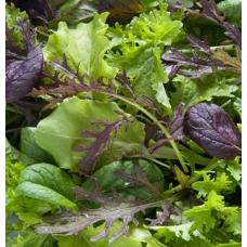 بذر سبزی های مخلوط اعلاء