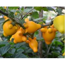 بذر میوه پستانکی
