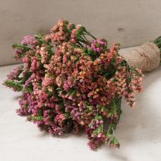 بذر گل استاتیس غروب آفتاب میکس
