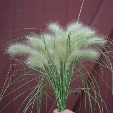 بذر چمن زینتی فیدرتاپ
