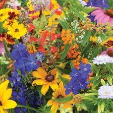 بذر گل استبرق و گل زرین بال میکس