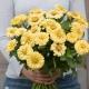 بذر گل آهار کوکب کرمی بزرگ