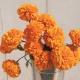 بذر گل جعفری نارنجی بزرگ