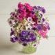 بذر گل فلوکس سایههای هنر میکس