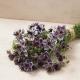 بذر گل سیاه دانه دلفت آبی