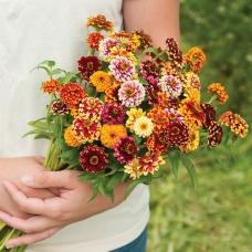 بذر گل آهار جیزی میکس