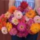 بذر گل آهار کاکتوسی میکس