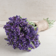 بذر گل استاتیس آبی سیکر
