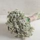بذر گل استاتیس سفید سیکر