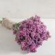 بذر گل استاتیس رز سیکر
