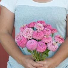 بذر گل آهار اوکلاهما صورتی