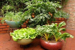 کاشت سبزیجات درگلدان