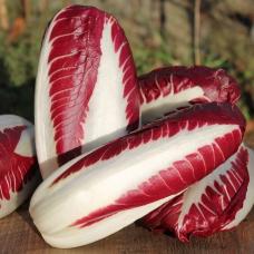 بذر کاسنی ترویسو