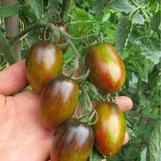 بذر گوجه اتمی برد