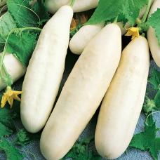 بذر خیار سفید
