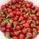 بذر فلفل قرمز تند گیلاسی