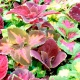 بذر حسن یوسف رنگین کمان میکس