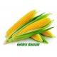 بذر ذرت شیرین طلایی بانتام