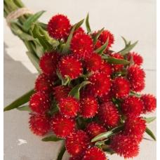 بذر گل تکمه ای مزرعه توت فرنگی