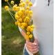 بذر گل کراسپدیا توپ خورشید ارگانیک