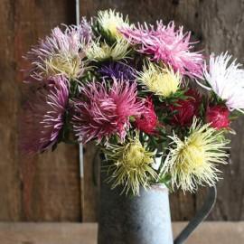 بذر گل مینای چینی افسانه اروپا