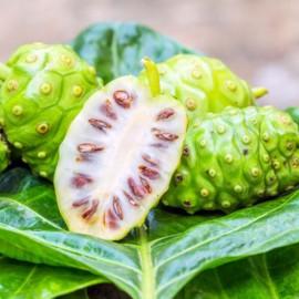 بذر توت هندی
