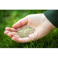 بذر چمن مناسب سایه