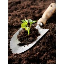 خاک گلدان ویژه بذرام