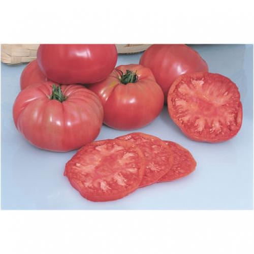 بذر گوجه فرنگی بنفش Pruden's