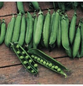 بذر نخود فرنگی اتریلو
