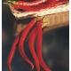 بذر فلفل بلند کاین جو