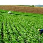 مقابله با مشکلات کشاورزی ناشی از تغییرات آب و هوایی