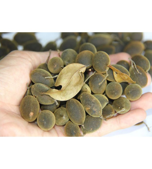 بذر میوه مخملی جنگل