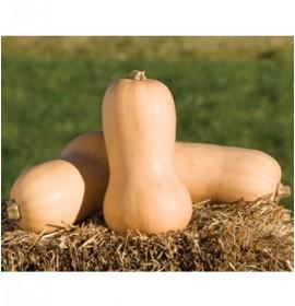بذر کدو تنبل گردوی سفید والتهام