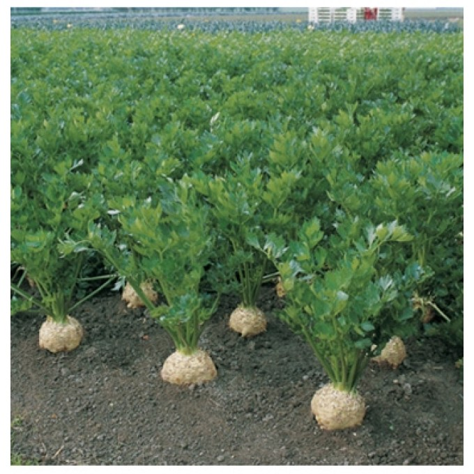 کانال تلگرام کشاورزی ارگانیک