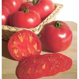 بذر گوجه فرنگی زیبای صورتی F1