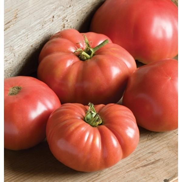 بذر گوجه فرنگی جانسون آلمانی ارگانیک