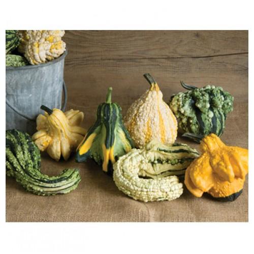 بذر کدو زینتی گرملینز
