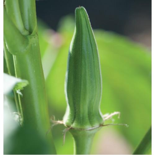 بذر بامیه کلمسون ارگانیک