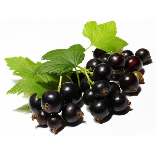 بذر انگور فرنگی سیاه