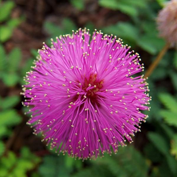 بذر گل قهر و آشتی