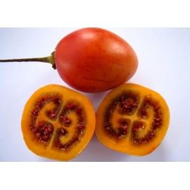 بذر میوه تاماریلو