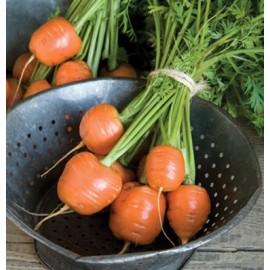 بذر هویج اطلس (بیبی کروت)