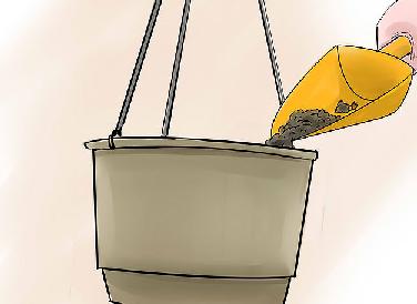 آموزش کاشت خیار در خانه
