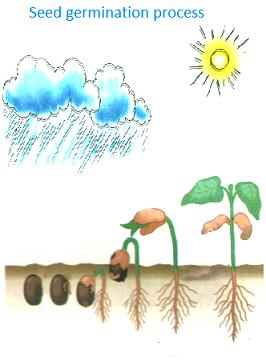 عوامل موثر در جوانه زنی بذر گیاهان