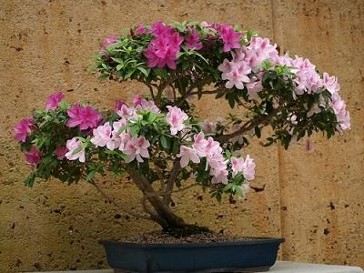 گل های مناسب برای کاشت در گلدان