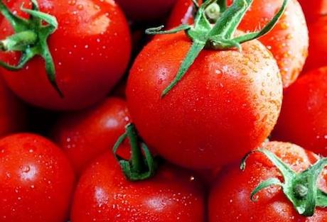 تولید گوجه فرنگی