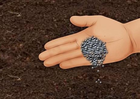 استفاده از کنجاله پنبه دانه برای کاهش PH خاک
