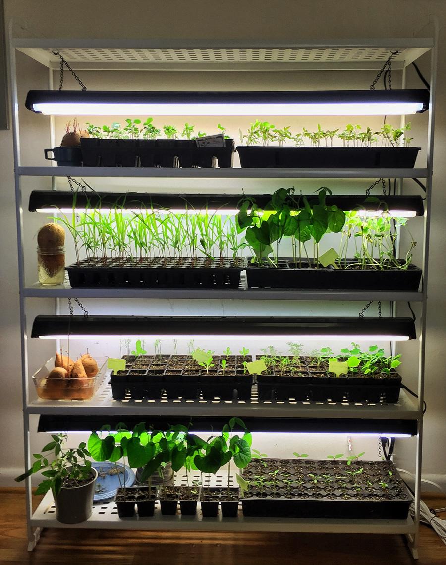 آماده کردن قفسه برای کاشت گیاهان